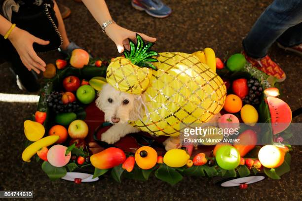 Dog in a pineapple costume attends the 27th Annual Tompkins Square Halloween Dog Parade in Tompkins Square Park on October 21, 2017 in New York City....