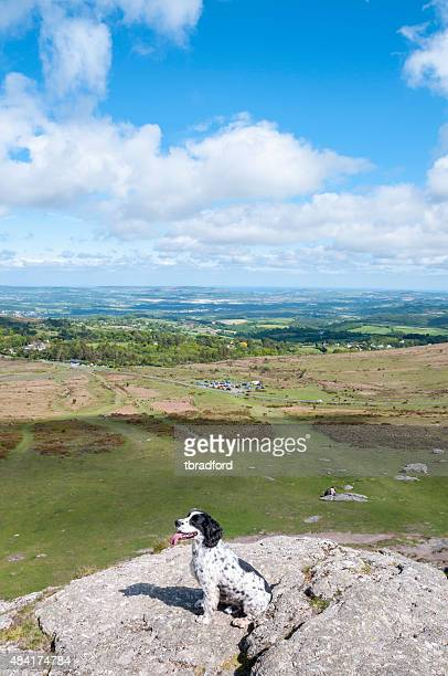 Dog In A Scenic Landscape