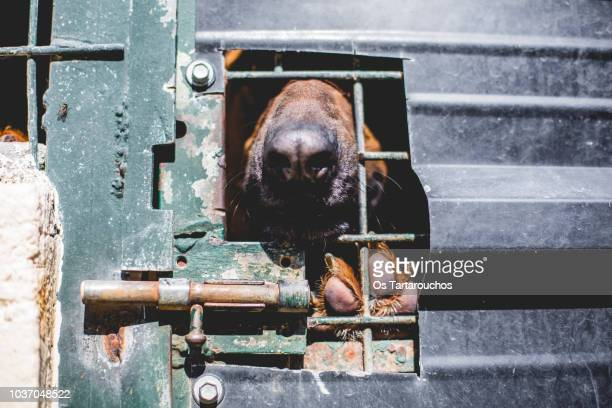 dog in a shelter sticking his snout through a hole in the door