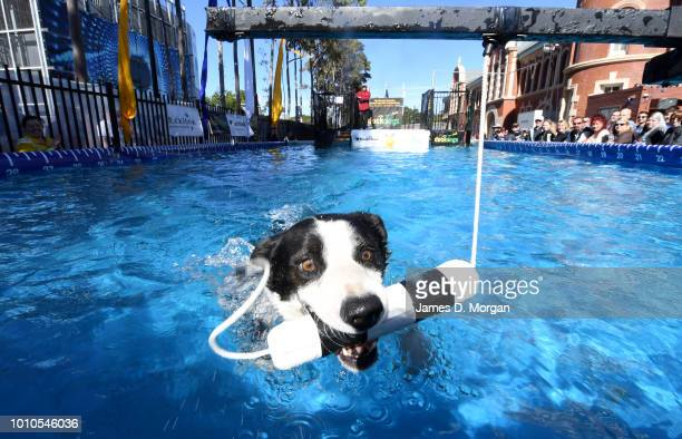 A dog in a swimming pool during the 2018 Sydney Dog Lovers Show on August 4 2018 in Sydney Australia The show is hosting the first ever Common Woof...