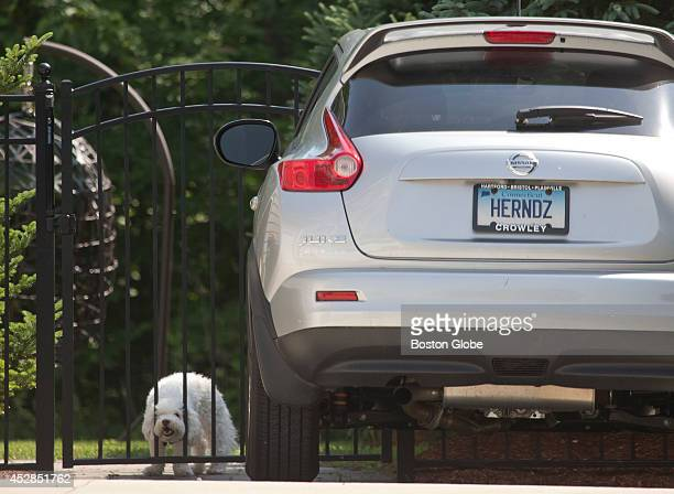 Dog in Aaron Hernandez's backyard looks out at the hordes of media camped in front of the house on Sunday, June 23, 2013.