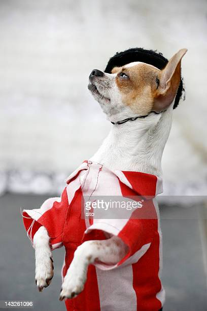 Dog in Athletic Bilbao shirt and beret
