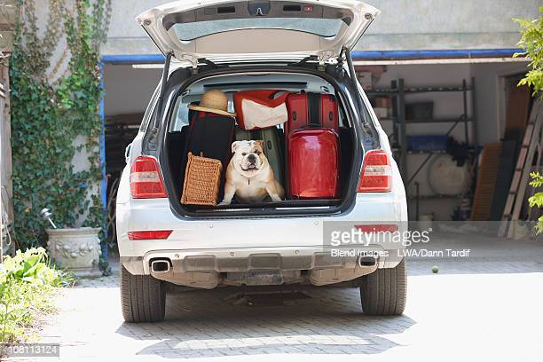 dog in back of car packed for vacation - boot stock pictures, royalty-free photos & images