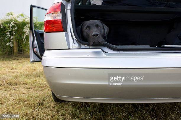 Dog in back of car