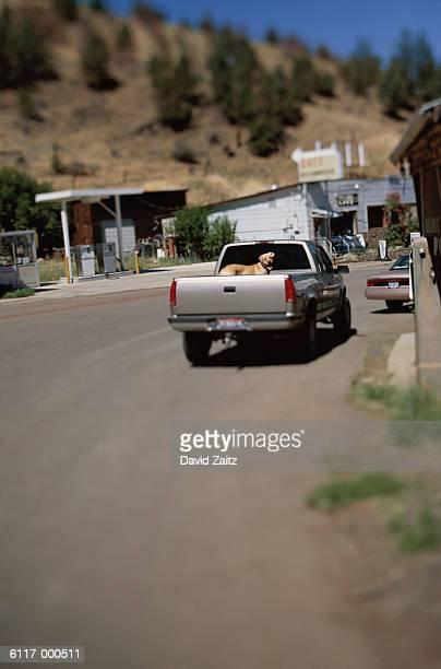 Dog in Back of Pickup Truck