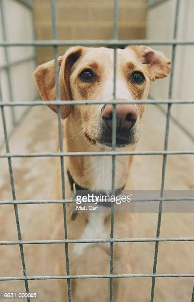 Dog in Cage at Dog Pound