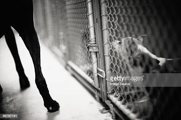 dog in cage - dog pound stock pictures, royalty-free photos & images