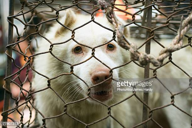 dog in cage - dog cruelty stock pictures, royalty-free photos & images