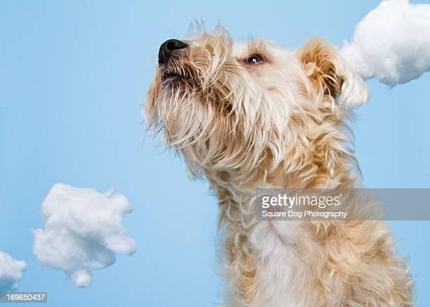 Dog in clouds