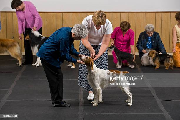 Dog in competition being examined by judge
