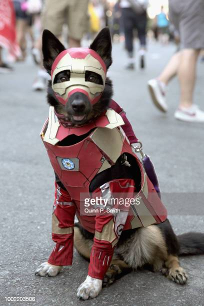 A dog in cosplay attends 2018 ComicCon International on July 19 2018 in San Diego California