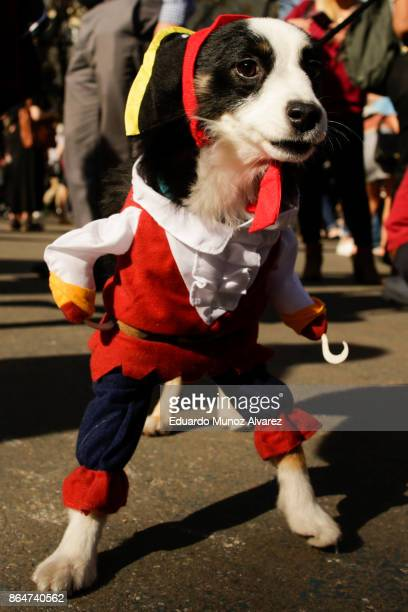 Dog in costume attends the 27th Annual Tompkins Square Halloween Dog Parade in Tompkins Square Park on October 21, 2017 in New York City. More than...