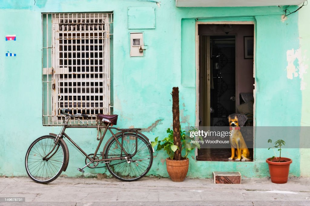 Dog in doorway of Cuban home : Stock Photo