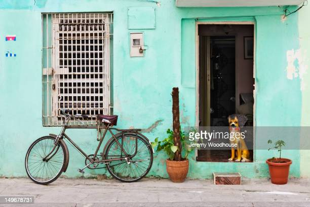 Dog in doorway of Cuban home