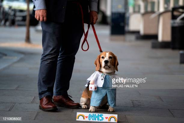 TOPSHOT A dog in fancy dress sits with its owner with a sign paying tribute to NHS staff during a national clap for carers to show thanks for the...
