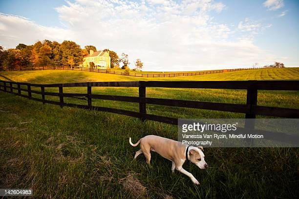 dog in field - vanessa van ryzin stockfoto's en -beelden