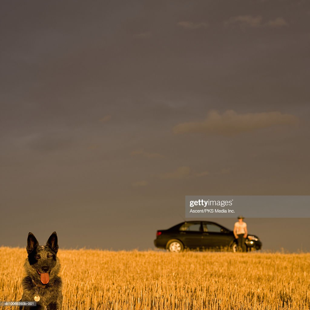 Dog in field, woman by car in distance : Foto stock
