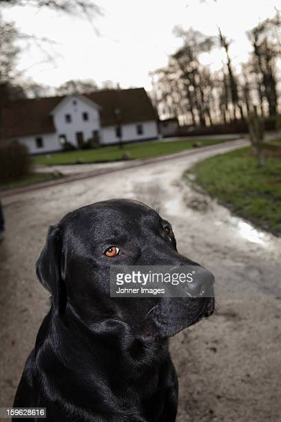 A dog in front of a house, Skane, Sweden.