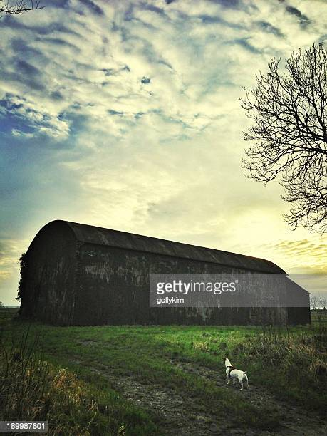 dog in front of an old abandoned barn at sunset - bad condition stock photos and pictures