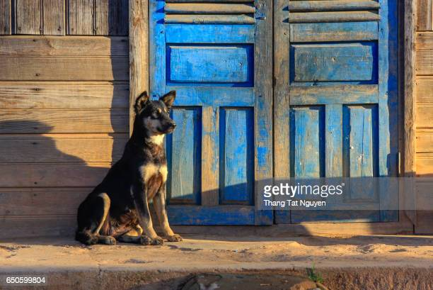 Dog in front of house