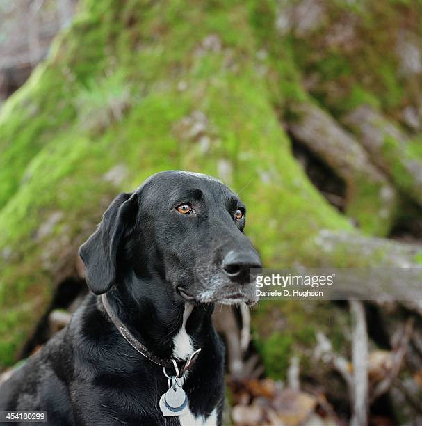 Dog in front of mossy tree