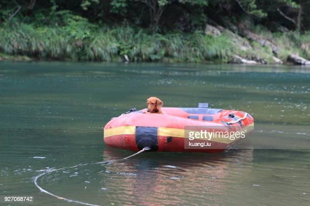 a dog in inflatable boat - bote inflável - fotografias e filmes do acervo