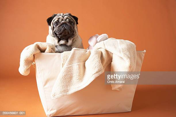 Dog in laundry basket