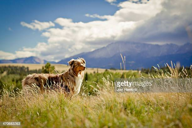 Dog in mountains with storm coming