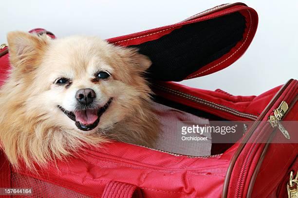 Cão na Caixa para Transporte de Animal de Estimação