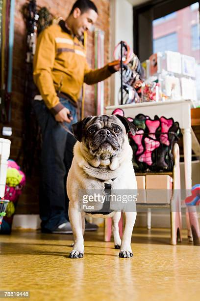 Dog in Pet Store