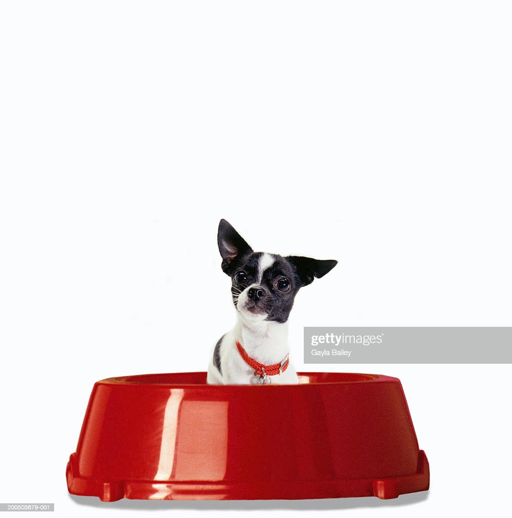 Dog in red food bowl (digital composite) : Stock Photo
