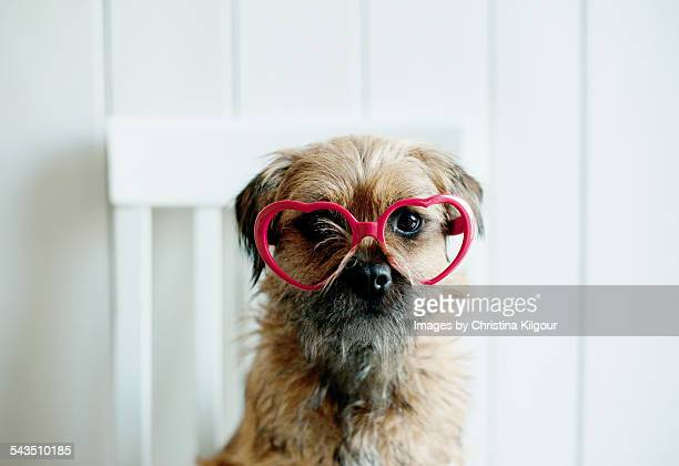 Dog in red heart shaped glasses