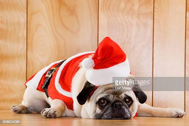 Dog in Santa Suit