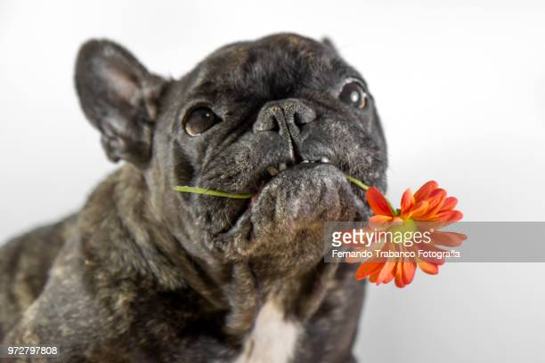 dog in spring - ugly dog stock photos and pictures