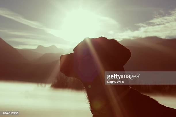 Dog in Sunflare