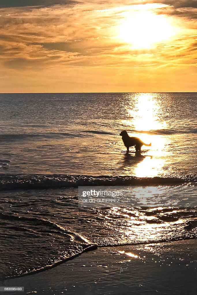A dog in the beach : Stock Photo