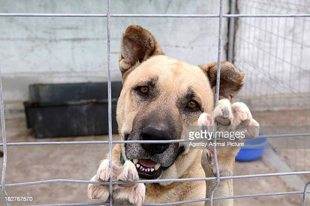 Dog in the dog shelter of Fasnia on October 01 2012 in Tenerife Spain