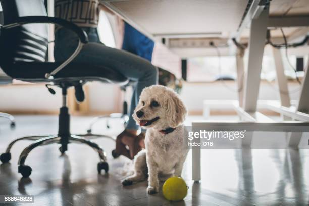 dog in the office - parte do corpo humano imagens e fotografias de stock
