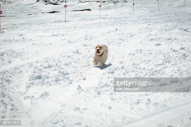 Dog in the Snow on Mt. Hood - Oregon