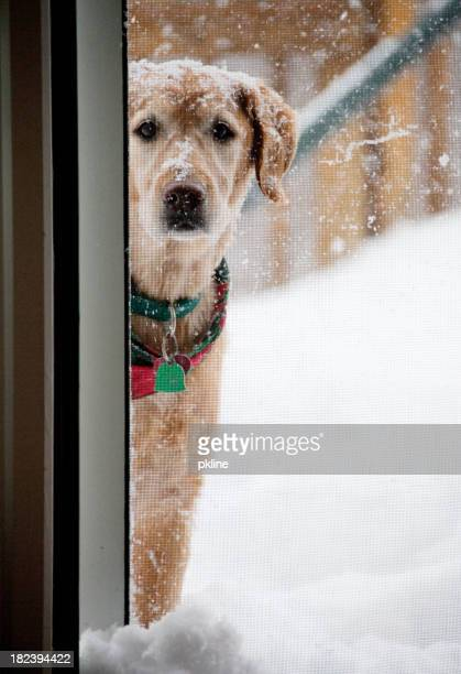 Dog in the snow peaking inside
