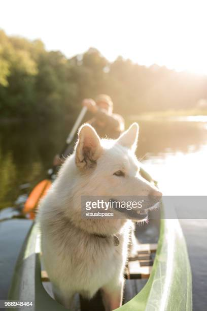 Dog in the sunset in a canoe