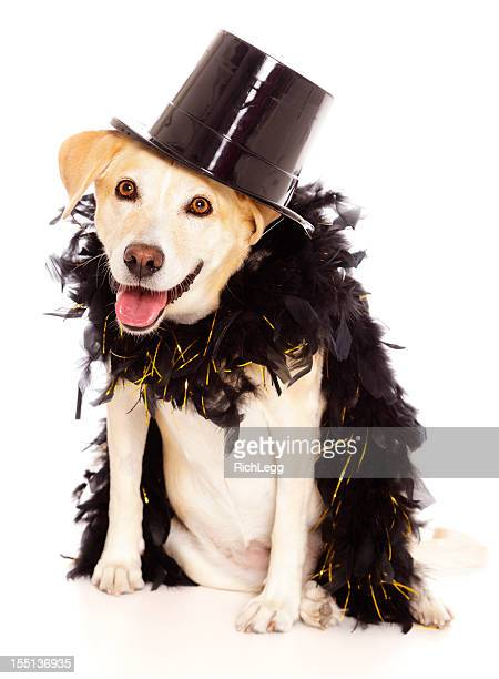dog in tophat - top hat stock pictures, royalty-free photos & images