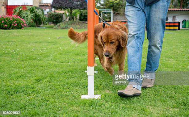 dog in training - training course stockfoto's en -beelden