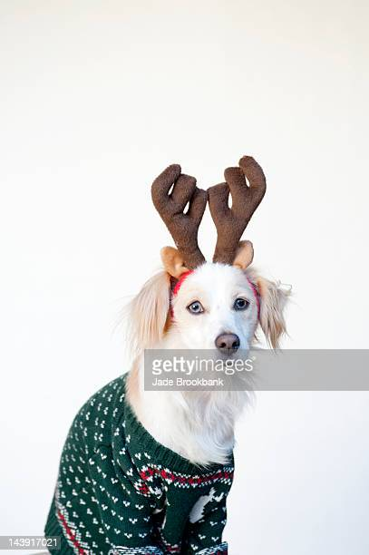Dog in ugly Christmas sweater