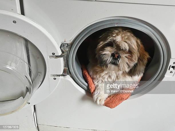 Dog in washing machine