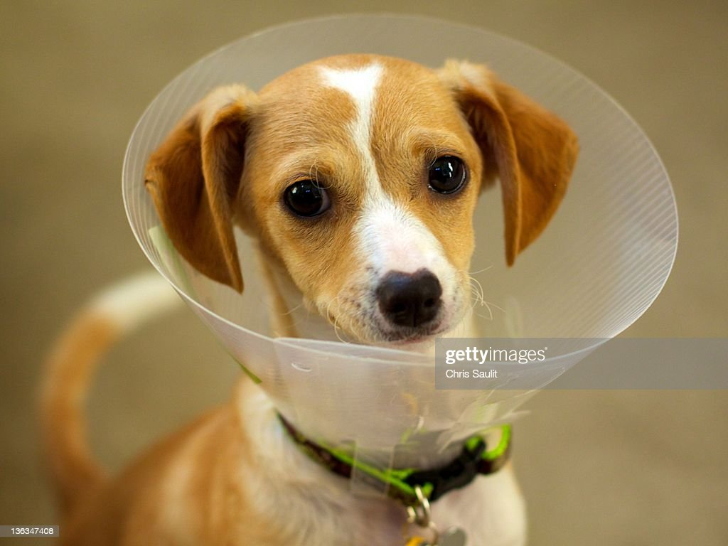 Dog inside funnel : Foto de stock