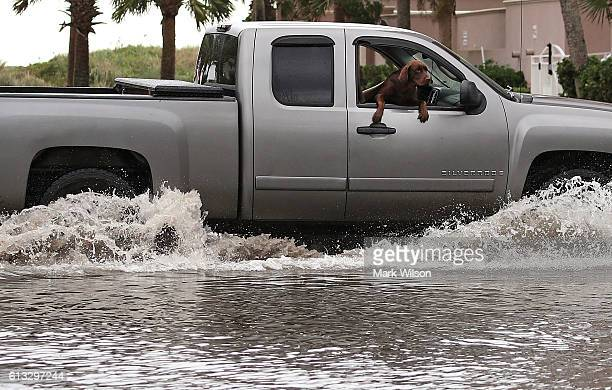 A dog inspects the flooding from the passenger seat of a truck October 8 2016 in Jacksonville Beach Florida As of Saturday morning Matthews has been...