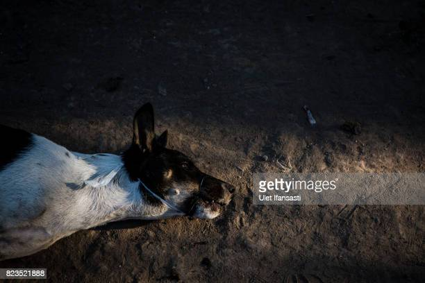 A dog is bound before slaughter at a dog meat butchery house on July 25 2017 in Yogyakarta Indonesia Indonesians have seen a surprising hike in dog...