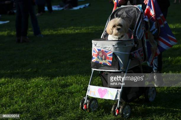 A dog is carried in a stroller ahead of the wedding of Britain's Prince Harry to Meghan Markle on May 19 2018 in Windsor England Prince Henry Charles...