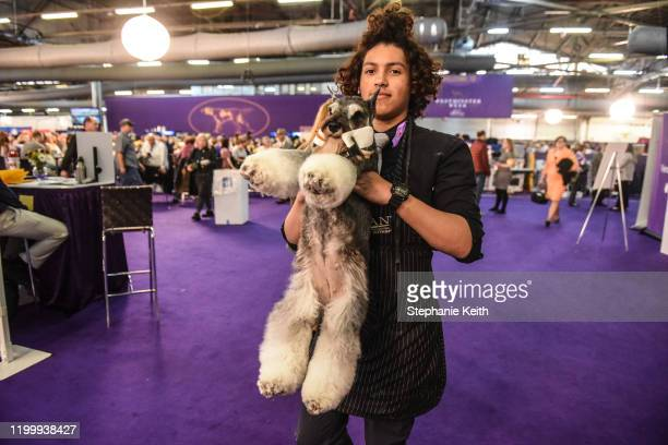 A dog is carried towards the competition ring during the 144th annual Westminster Kennel Club Dog Show on February 10 2020 in New York City The show...
